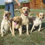 Adiestramiento canino Gufy